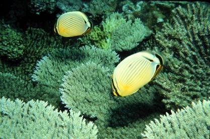 Fish and Coral_Jim Maragos USFWS