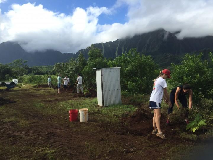 The PICCC staff plants ulu trees